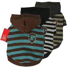 boy yorkie clothes odie on your yorkie and how to potty