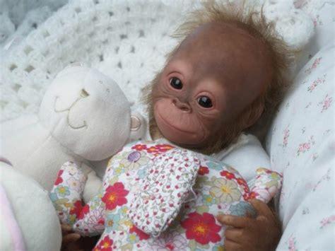 Wo Kann Baby Affen Kaufen 4725 by Affe Als Haustier Eine Neue Exotische Mode