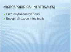 Clasificación de parásitos Rangeli