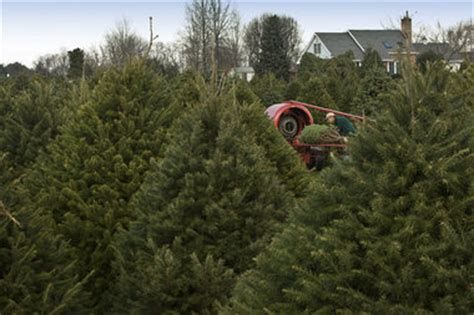 christmas tree farms allentown pa consumers spending more green on firs nj