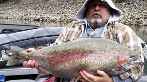 Idaho Records 28 Pound Rainbow Trout In Northern Idaho Would Been Record Breaker Fox News