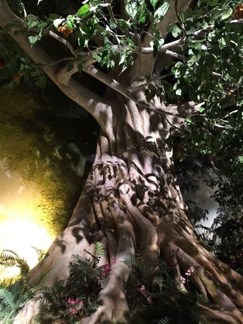 creation museum boone county kentucky  tree