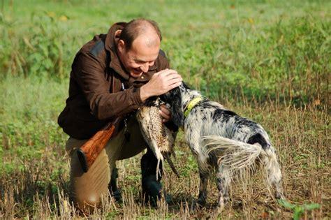 alimentazione cani da caccia crocchette per cani da caccia crocchette per allevatori