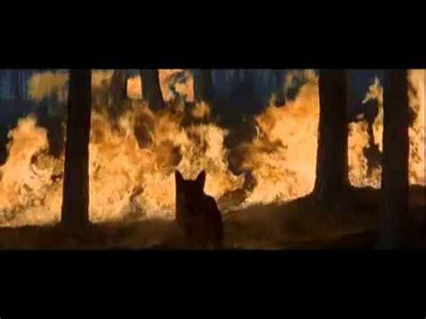 gladiator film dog 4 gladiator battle for germania 10 ad youtube