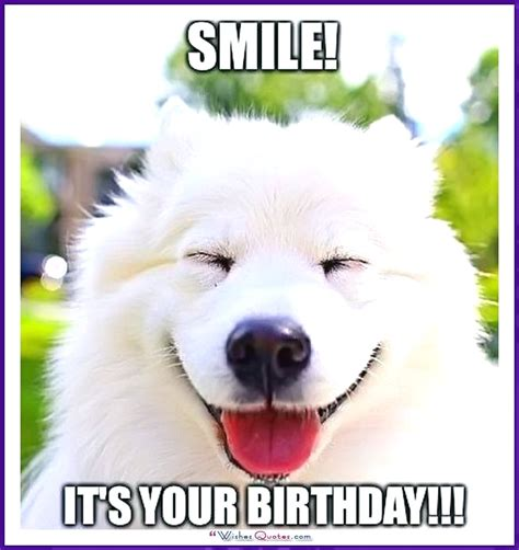 Dog Birthday Meme - happy birthday memes with funny cats dogs and cute animals