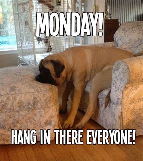 Monday Dog Meme - omg it s monday pets on parade lake forest
