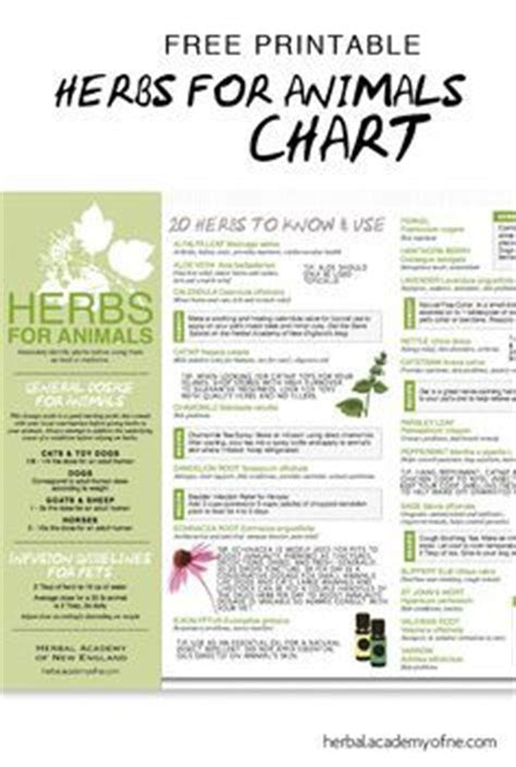 herbal supplement chart related keywords herbal supplement chart long tail keywords keywordsking 1000 images about animal friendly recipes and more cool