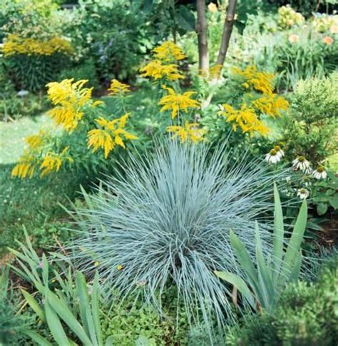 weeds in the backyard 4 feet tall best 25 zone 4 perennials ideas on pinterest purple
