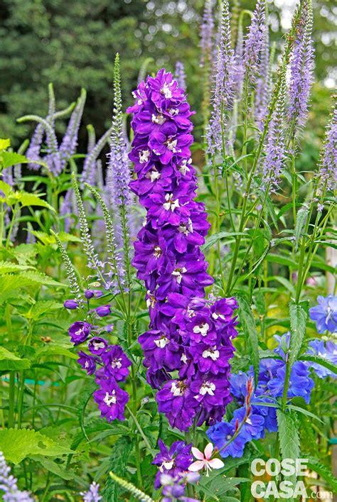 colore fiori fiori d estate per il giardino cose di casa