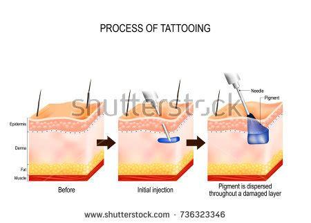 tattoo needle process tattoo process tattooing process causes damage stock