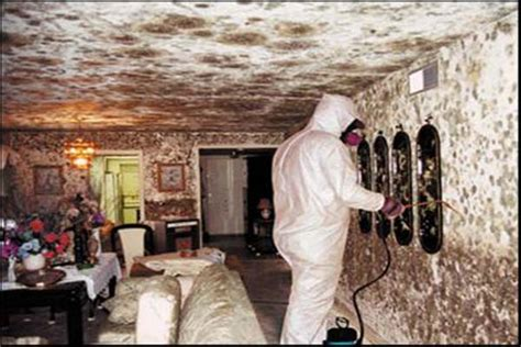 white mold in house basement white mold in basement trully terriblbe white mold in basement mold spores
