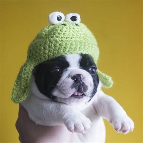 puppies in hats puppy hat 1funny