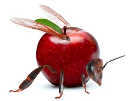 Apple Bee | apple bee by hitmonchu on deviantart