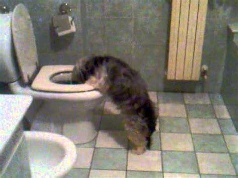 testa nel cesso vomita nel wc incredibile
