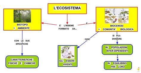 catena alimentare prato mappa concettuale ecosistema