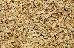 Sekam Padi Bakar membuat pakan ternak dari sekam padi aneka budidaya