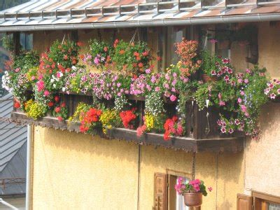 piante da terrazzo esposto a nord piante e fiori fiori e piante per il balcone il