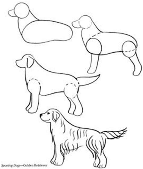 drawing of a golden retriever 17 best images about golden retriever on