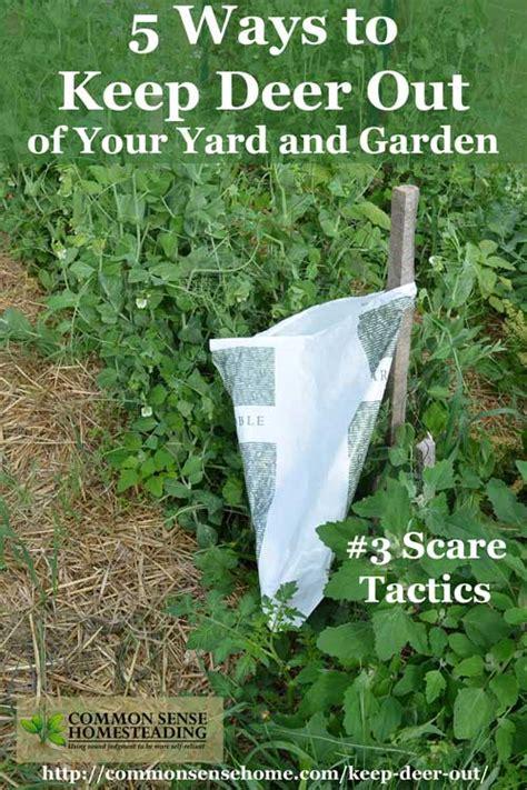 Keep Deer Out Of Vegetable Garden Keeping Deer Out Of Vegetable Garden Talentneeds