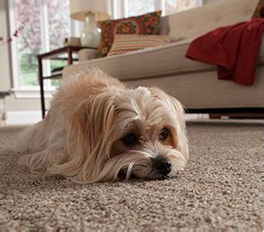 best rugs for pets types of carpet learn about carpeting styles types mohawk flooring