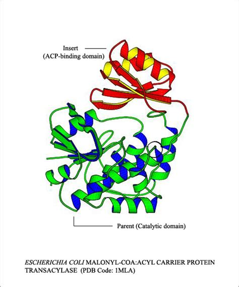 protein domain biology review
