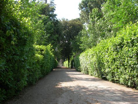 index of immagini fotografie giardini villa medici 27 5