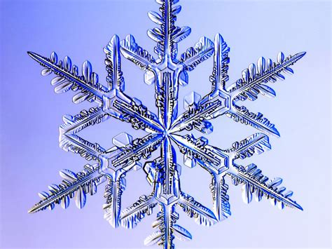 snowflake and snow crystal photographs dendrite snowflake