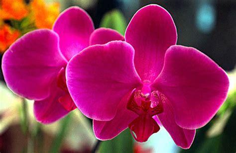 imagenes de hojas raras 15 de las flores mas hermosas del mundo