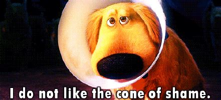 Cone Of Shame Meme - dug gifs find share on giphy