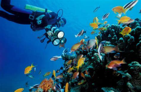aqaba dive jordanien 10 sev 228 rdheter och saker att g 246 ra i jordanien