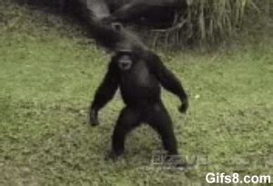 new year monkey animated gif monkey gif find on giphy