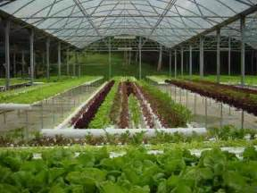hydroponic garden on roatan island honduras