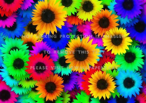 colors of sunflowers rainbow flower backgrounds hd auto design tech