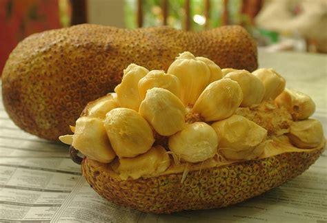 Custom Fruit Buah Tambah Nama tanaman cempedak durian bibitbunga