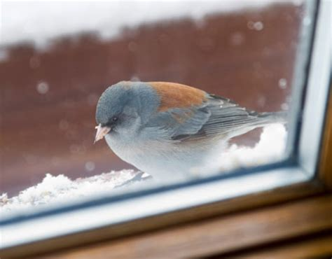 the importance of protecting birds from windows backyard
