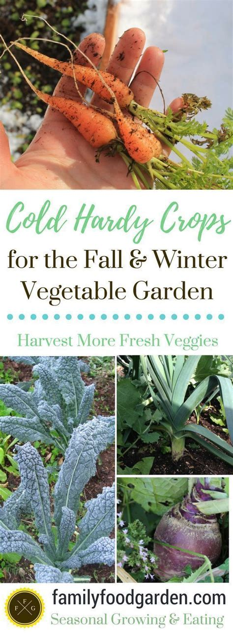 great list of cold hardy crops for your fall and winter