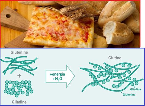 alimenti contenenti glutine gli alimenti contenenti glutine fanno bene o fanno