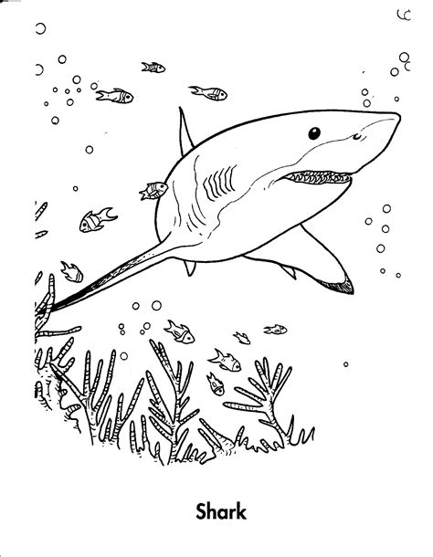 Printable Shark Coloring Pages free printable shark coloring pages for