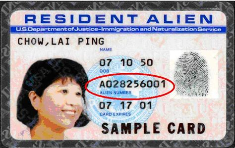 Green Card Picture Sle green card number permanent resident card or