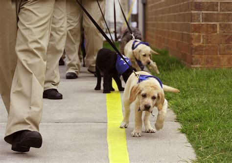 how guide dogs are trained 10 reasons to respect guide dogs viralpawz