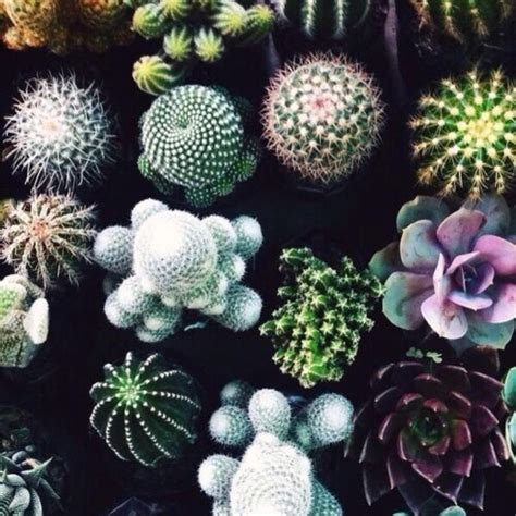 Plants For The House by Cactus