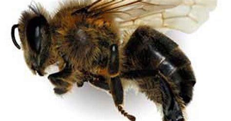 black mirror killer bees attack of the killer bees couple escape swarm of 30 000