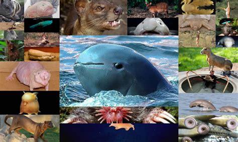 imagenes de animales jamas vistos 21 extra 241 os animales que probablemente nunca has visto