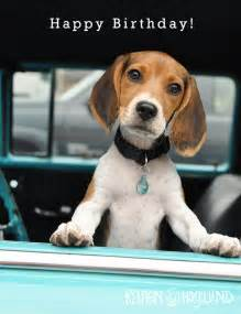 beagle birthday card items similar to beagle puppy birthday cards set of 4 5
