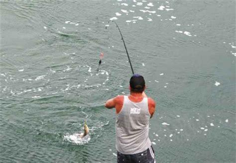 rahasia resep umpan patin jitu terbaik 57 umpan mancing jitu ikan patin di sungai dan di kolam