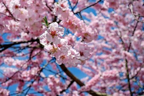 fiori giapponesi i fiori giapponesi tutti i simboli e significati nella