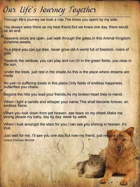 pets in heaven gift for owners 17 best images about heaven and pet loss on to heaven my and losing a pet