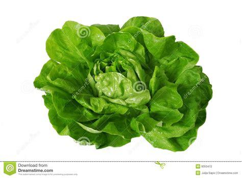 imagenes lechugas verdes lechuga verde aislada sobre blanco foto de archivo