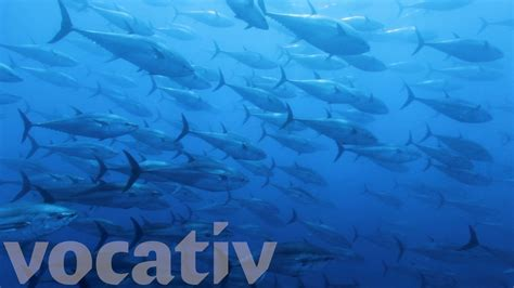 blue song at the end warming oceans could lead to the end of seafood