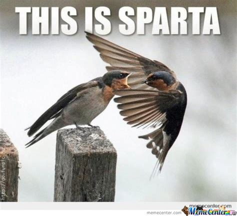 Meme Bird - sparta bird by dracobdr meme center